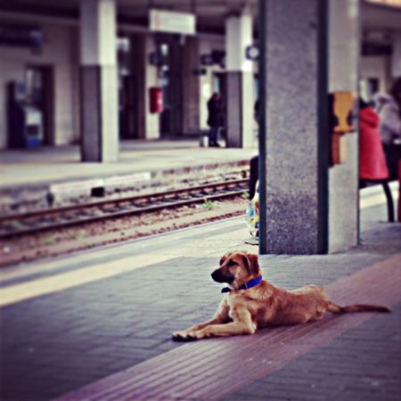 Train Station Dog Dogs