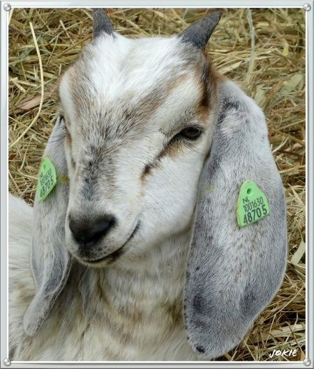 EyeEm Animal Lover Farm Life EyeEm Best Shots