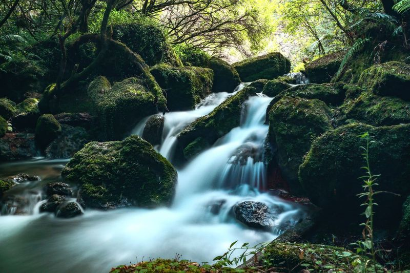 Beauty In Nature Blurred Motion Flowing Flowing Water Forest Land Long Exposure Moss Motion Nature No People Outdoors Plant Power In Nature Rainforest Rock Rock - Object Scenics - Nature Solid Stream - Flowing Water Tree Water Waterfall
