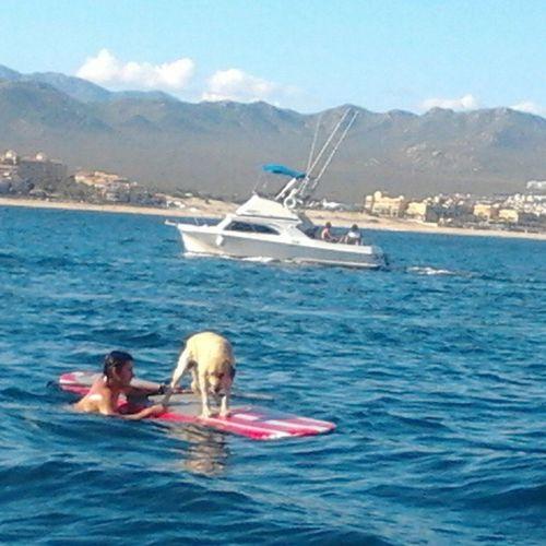 El perro surfista