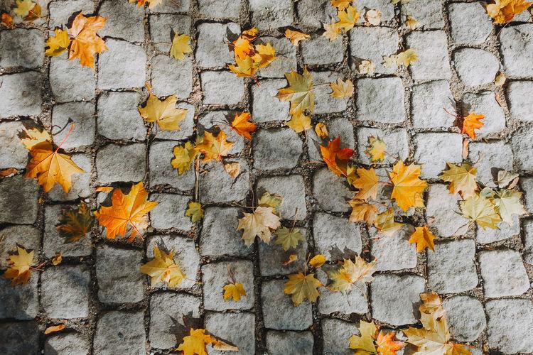 Maple leaf on the floor. Czech Republic Leaves🌿 Prague Autumn Leaves Maple Leaf Nature Orange Color Textured