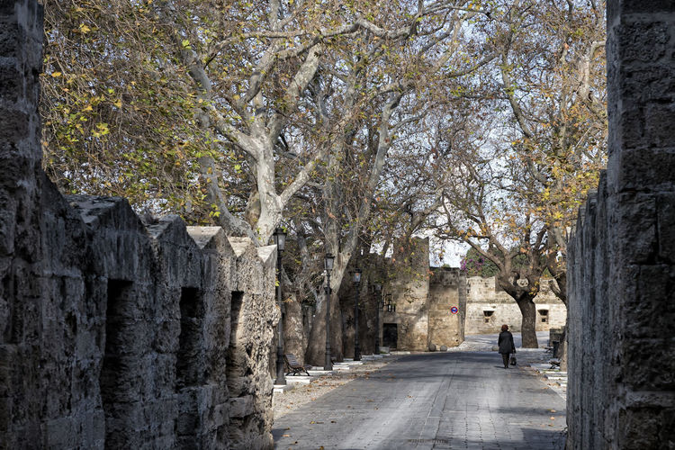 Old Town (Rhodes) Treelined Rear View One Person Day Tree Greece Old Town Rhodes Medieval Winter Autumn Outdoors Walking Road City Travel Travel Destination Holiday Holidays Vacation Vacations Europe Beautiful Historical
