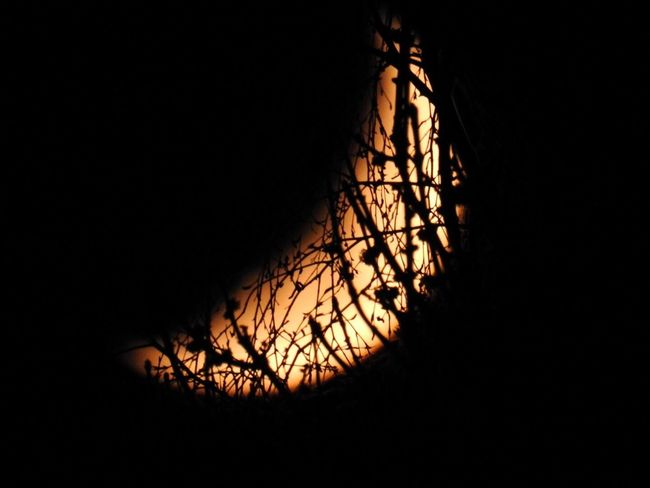 Nature Dark No People Beauty In Nature Moon Branches Tranquility Night Not Cropped Outdoors