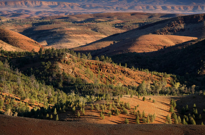 Flinders Ranges South Australia Remote Outback Range Sunset Branch Tranquil Scene Mountain Scenics - Nature Beauty In Nature Environment Landscape No People Land High Angle View Mountain Range Idyllic Arid Climate