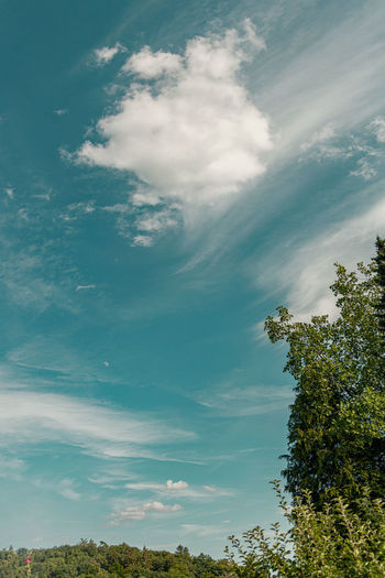 Cloud - Sky Sky Tree Plant Beauty In Nature Tranquility Day No People Nature Scenics - Nature Growth Low Angle View Tranquil Scene Green Color Outdoors Idyllic Non-urban Scene Environment Blue Treetop