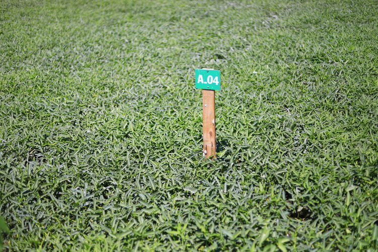 Green Color Grass Plant Day Land Outdoors Selective Focus Communication High Angle View Sunlight Single Object Nature No People Growth Close-up Tranquility Number Field Sign Sport