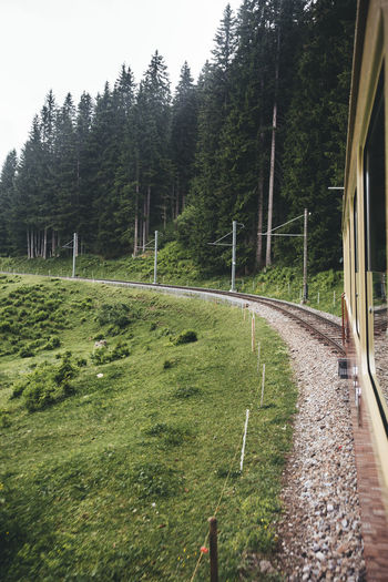 Tree Plant Transportation Rail Transportation Green Color No People Grass Mode Of Transportation Nature Land Train Day Growth Forest Field Beauty In Nature Scenics - Nature Public Transportation Track Environment Outdoors Switzerland Swiss Alps Schweiz Green