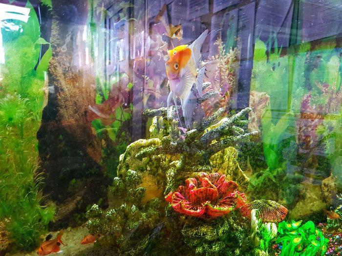 Hello.. Fish In Aquarium Close-up Green Color EyeEmNewHere