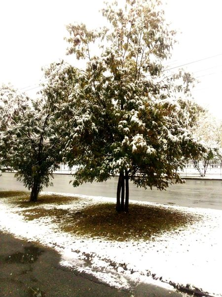 Snow ❄ Snow Covered Snow Day ❄ Snow Tree October