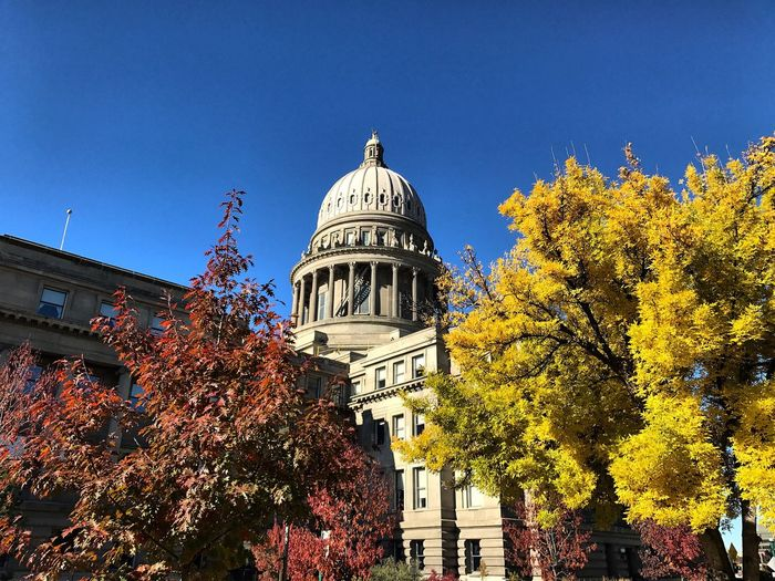 Autumn Change Architecture Built Structure Tree Building Exterior Dome Leaf Day Low Angle View Outdoors No People Clear Sky Nature Sky Boise Capitol Capital Idaho Architecture Government Travel Destinations Trees Autumn Tree