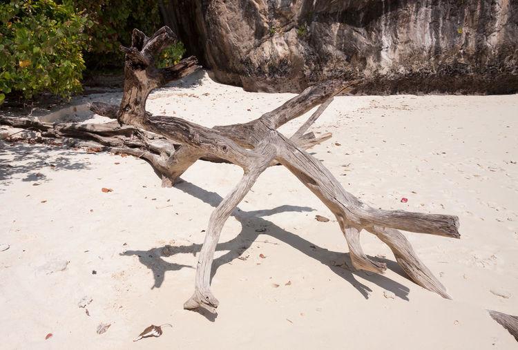 Driftwood on sand