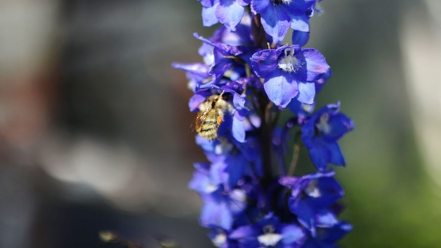 Flower Insect Nature Close-up No People Beauty In Nature Outdoors Plant Blue Flower Head Freshness