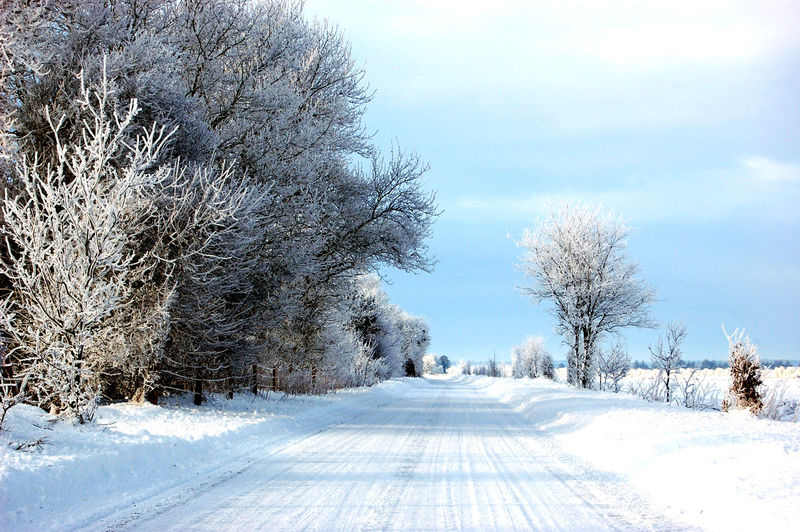 Frost Beauty In Nature Blue Cloud - Sky Cold Temperature Day Environment Extreme Weather Frozen Ice Land Landscape Nature No People Non-urban Scene Outdoors Plant Scenics - Nature Sky Snow Snowing Tranquil Scene Tranquility Tree White White Color Winter