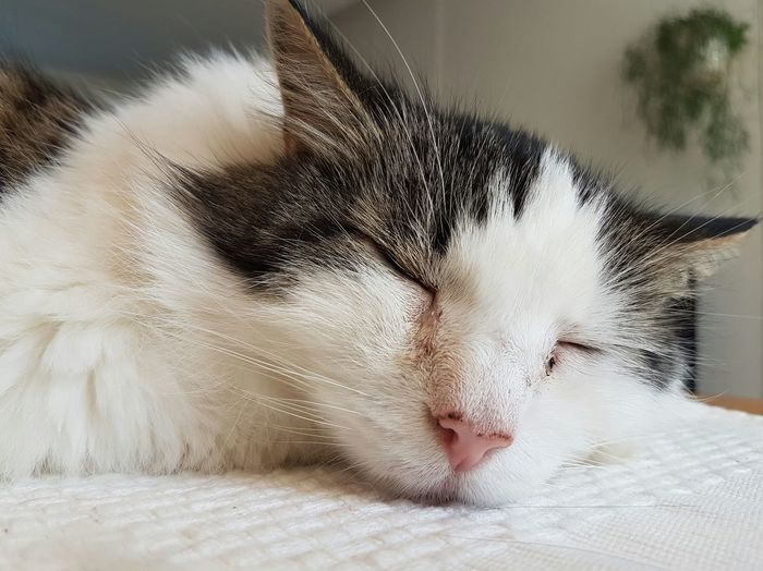 Extreme close-up of cat sleeping indoors