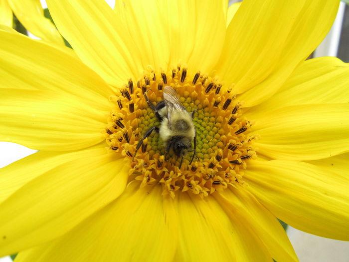 Bee on