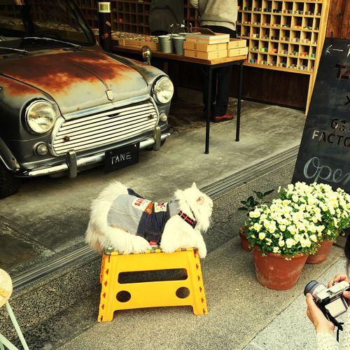 Take Photos EyeEm Have A Nice Day♥ Japan Camera Hoto Walking Okayama Kurashiki Phot Good Morning EyeEm Porto