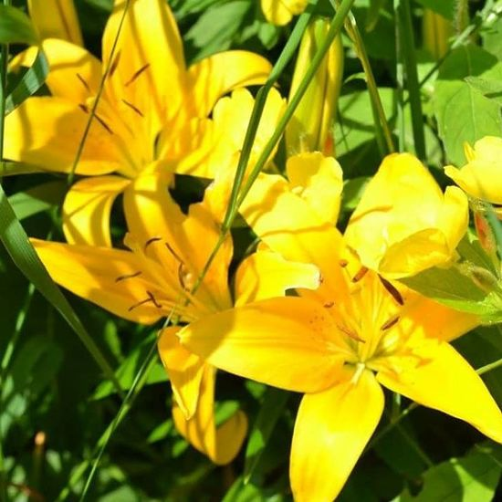 Flower Petal Yellow Nature Beauty In Nature Outdoors