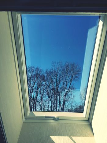 Window view Tree Non-urban Scene No People Window View Window Window Architecture Built Structure Glass - Material Nature Low Angle View Transparent Day No People Plant Building Indoors  Sky Tree Blue Sunlight Pattern Reflection Glass