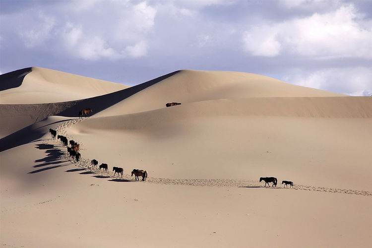 Gobi, Mongolia Large Group Of Animals Landscape Animal Sunset Social Issues Animals In The Wild Animal Wildlife Flock Of Birds Outdoors Sky No People Bird Sand Dune Nature Animal Themes Day