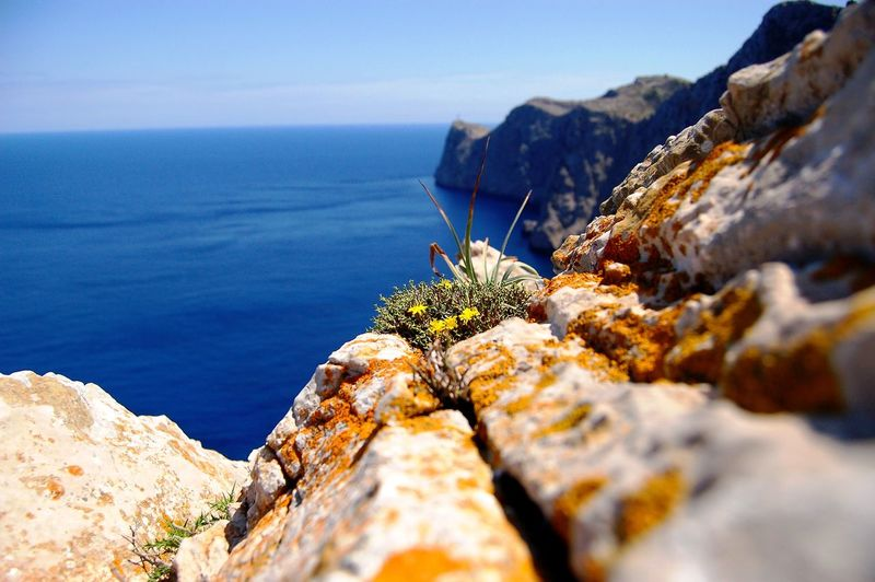 A Bird's Eye View Majorca Rock Rock - Object Tranquil Scene Sea Seascape Seaside Sea And Sky rock Sea View Sea Rocks View View From Above Spain ✈️🇪🇸 Spanish Island Flowers TakeoverContrast