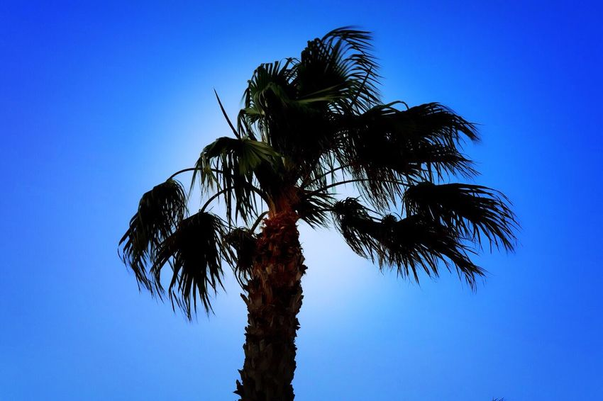 Low Angle View Tree Palm Tree Blue Clear Sky Tree Trunk Growth No People Day Nature Beach EyeEmNewHere MarcoLopezFotografia Eos750d📷 España🇪🇸 Españoles Y Sus Fotos Scenics Plant