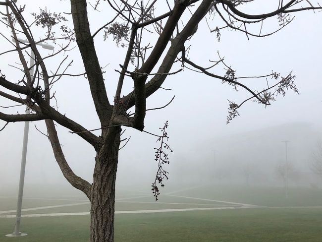 #fog #merced #ucmerced #winter #california Nature Tree Beauty In Nature Day Fog Tranquility Branch Tranquil Scene Bare Tree Scenics Outdoors