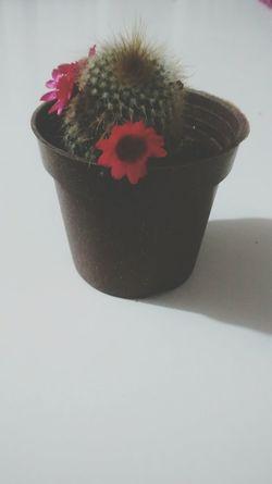 Flower Plant Vintage