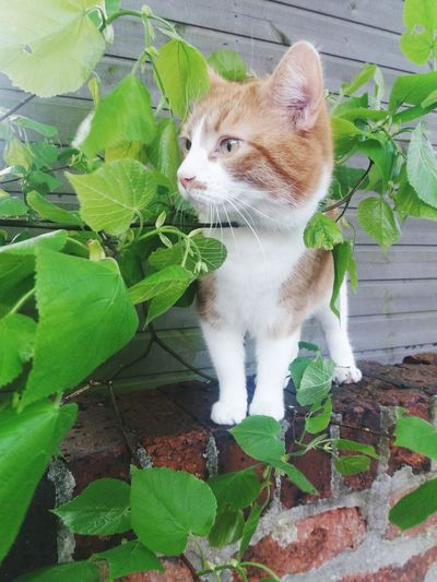 Cubric Cubric My Cat Grantham Outside Photography Green Male Feline England Peaking Through Animals In The Wild Pets Portrait Leaf Domestic Cat Feline Cute Animal Themes Plant Close-up Green Color Whisker Fluffy Cat At Home Young Plant