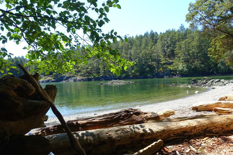 Salt Spring Island Canada Abventure Exploring Hiking Landscape Sunny Day Freshness Forest Nature Tree Sea Sky