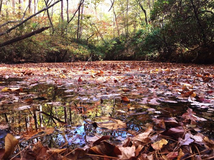 Autumn leaves floating on water in forest