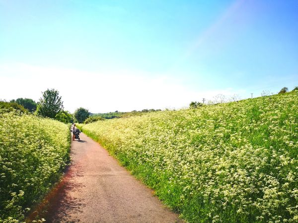 Blue Sky Old Railway Summer Sunshine Cow Parsley May Flowers Rural Scene Summer Walking Full Length Sky vanishing point