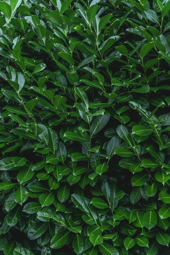 Backgrounds Green Wallpaper Green Texture Textures and Surfaces Surfaces And Textures Pattern, Texture, Shape And Form Wallpaper Background Copy Space Background Texture Green Color Leaf Growth Plant Part Plant Full Frame Nature Backgrounds Beauty In Nature No People Freshness Close-up Outdoors