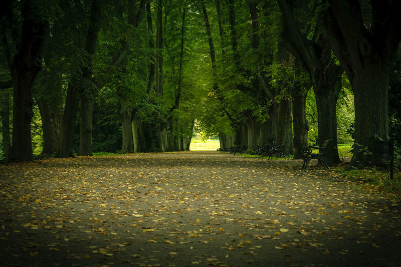 an alley in a park Path Alley Autumn Beauty In Nature Day Forest Growth Leaf Nature No People Outdoors Park Path In Nature Scenics Tranquil Scene Tranquility Tree Tree Trunk