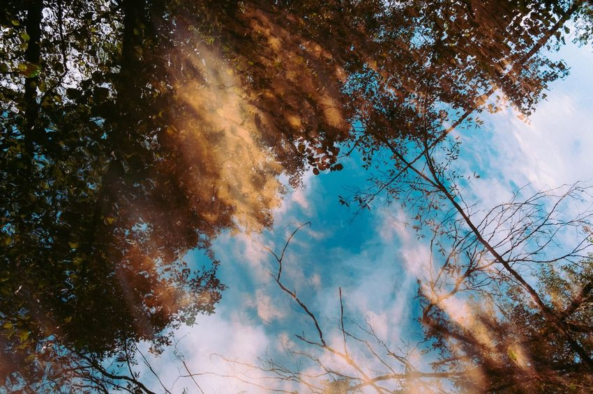 Tree Nature Sky No People Beauty In Nature Low Angle View Tranquility Outdoors Day Blue Growth Scenics Branch Fuji-xe2s Tenebrio.photos Autumn Colors Mirror Reflection Water Reflexion Perspectives On Nature