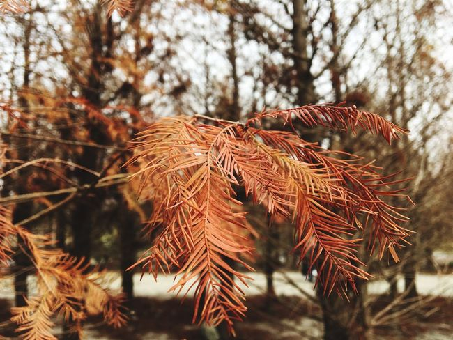 Nature Focus On Foreground Autumn No People Close-up Plant Tranquility Growth Beauty In Nature Day Outdoors Fragility Tree