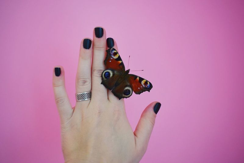 Cropped hand of woman with butterfly against pink background