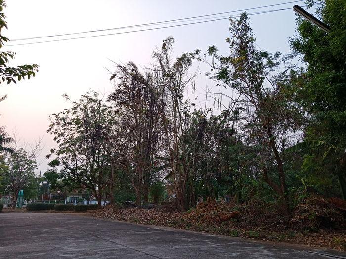 😮😮 Sunset Light Light Evening Thailand Tree Sky