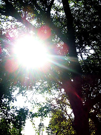 Bright light from above Natural Light Tree Low Angle View Sunbeam Lens Flare Sun Sunlight Nature Day Branch Outdoors Beauty In Nature No People Growth Forest Sky
