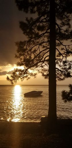 Another spectacular Lake Tahoe sunrise #sunrise #reflection #lake #view Tree Water Silhouette Reflection Beach Sky Cloud - Sky