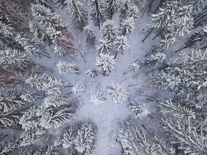 Full frame shot of snowy trees in forest