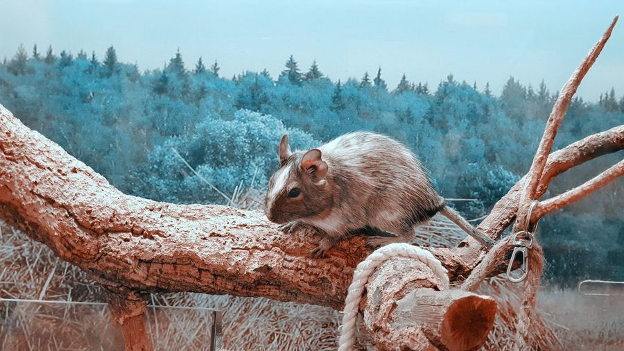 View of animal on snow covered landscape