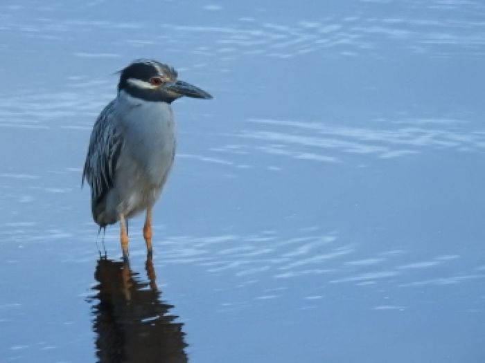 water bird Bird