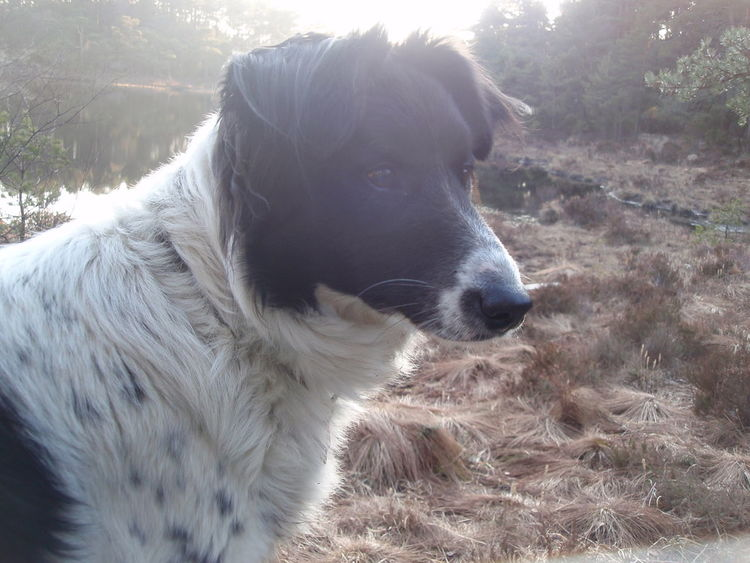 Animal Themes Bordercollie  Close-up Day Dog Domestic Animals Forest Nature No People One Animal Outdoors Pets
