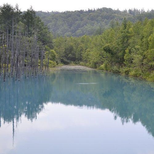 青い池 北海道 風景