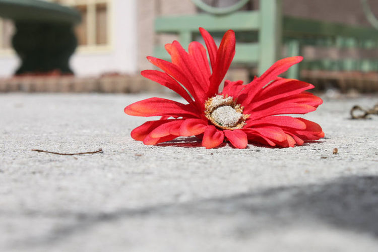 Flowerwer] Broken Beauty