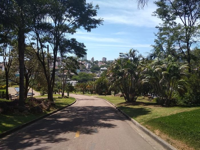 Brasil ♥ Exchange Rotary Tree Shadow Sky Cloud - Sky Empty Road Botanical Garden Country Road Flowering Plant Yellow Line Double Yellow Line Tranquility