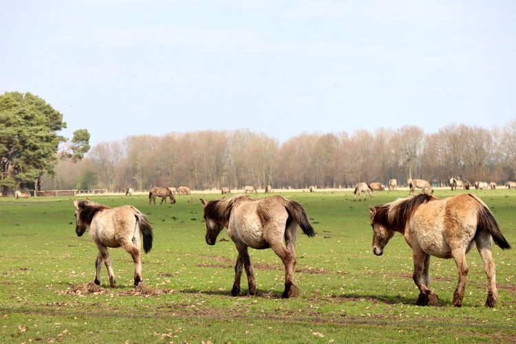 WildHorses Nature Tree Rural Scene Agriculture Grazing Group Of Animals Animal Themes Sky Ranch Horse Pony My Best Photo Stay Out Springtime Decadence