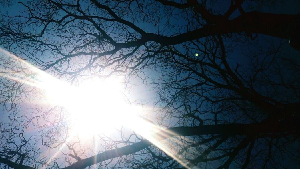 Nerves Microuniverse Sun Tree Sunlight Beauty In Nature Outdoors No People Day Sky Low Angle View