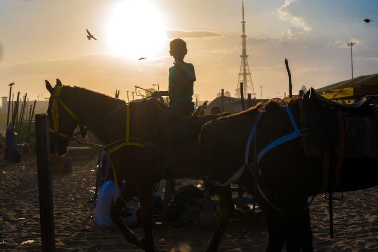 On the beach in Chennai horseback riding is a common past time. Chennai The Traveler - 2018 EyeEm Awards Chennai,India Chennaibeach Horseback Riding Indiabeaches Indiapictures Sunsetbeach Sunsetindia Travelindia