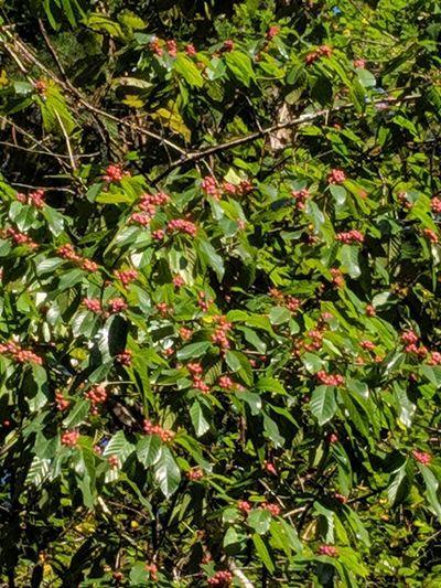 Full frame shot of berries on tree